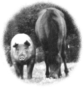 pig_horse-277x300