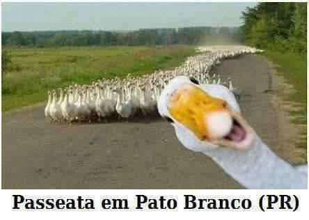 patobranco994