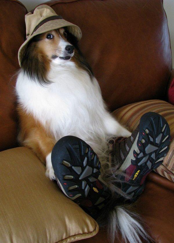 cachorro-cavalheiro